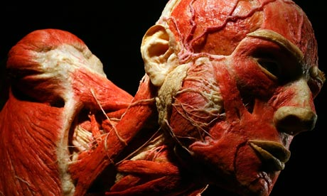 von-hagens-body-worlds-006